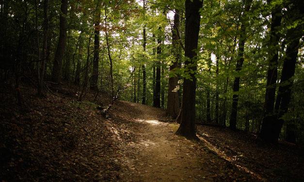 Mänskliga skelettdelar hittade i skogsområde